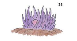 Violetgrass.jpg